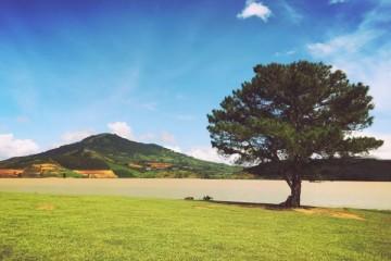 Hướng dẫn đường đến cây cô đơn Đà Lạt