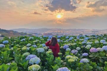 Du xuân Đà Lạt với 7 điểm đến nổi bật của xứ ngàn hoa