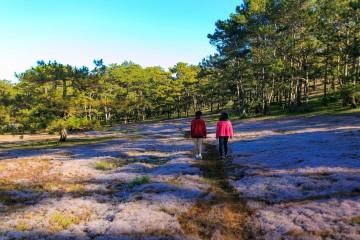 Tour tham quan cánh đồng cỏ Tuyết Đà Lạt
