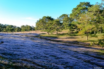 Cánh Đồng Cỏ Tuyết Đà Lạt – Cảnh thần tiên chốn trần gian