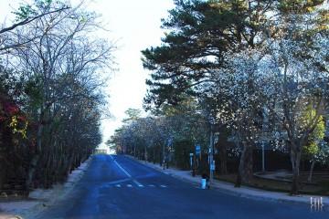 Đà Lạt những ngày tháng 12: Mùa hoa về điểm tô đất trời