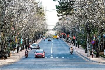 Đông Đà Lạt đẹp ngỡ ngàng với 2 mùa hoa khoe sắc rực rỡ