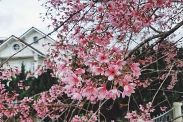 Tiết trời mùa xuân ở Đà Lạt thật dịu dàng như thành phố này vậy