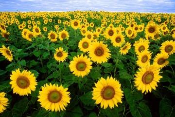 Đà Lạt thành phố của ngàn hoa