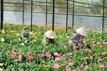 Điểm danh những làng hoa nổi tiếng nhất Đà Lạt hiện nay