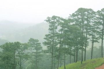 Đà Lạt - Thành phố của những ngày mưa buồn thênh thang