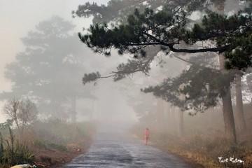 Vì sao người ta cứ hoài thương nhớ Đà Lạt mùa mưa như thế?