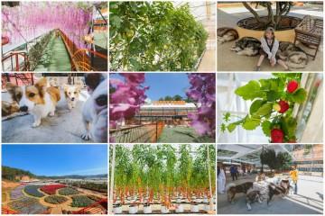 Thổi bay muộn phiền cùng không gian đầy thú vị của Nông Trại Cún - Puppy Farm