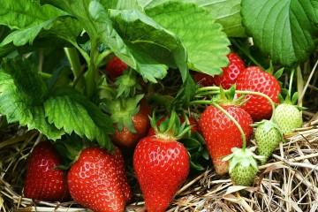 Cung cấp sỉ và lẻ các loại rau, củ, quả sạch Đà Lạt