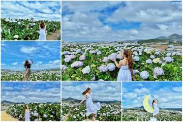 Đắm say cùng khung cảnh rợp sắc hoa cẩm tú cầm tinh khôi
